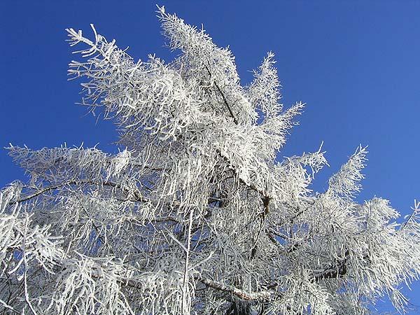 traumwinterwetter nach starkschneefällen ~ Kühlschrank Vereist Schnell